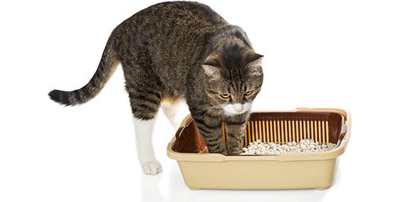 猫の膀胱炎 頻尿は膀胱炎のサイン猫の病気健康ケア事典